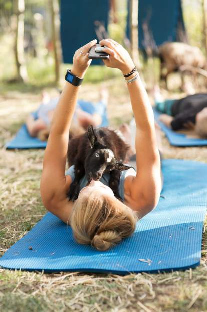 During goat yoga, the goats have been known to head butt, lie down and even suck toes.