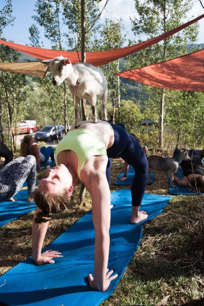 Many participants often want to take a goat home after trying goat yoga, but having goats is not all fun and games.