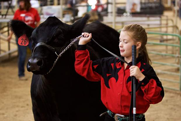 Alyah Ahring raised this year's Grand Champion steer. She won the honor at the Junior Livestock Judging. The Junior Livestock Auction is Saturday, July 28.