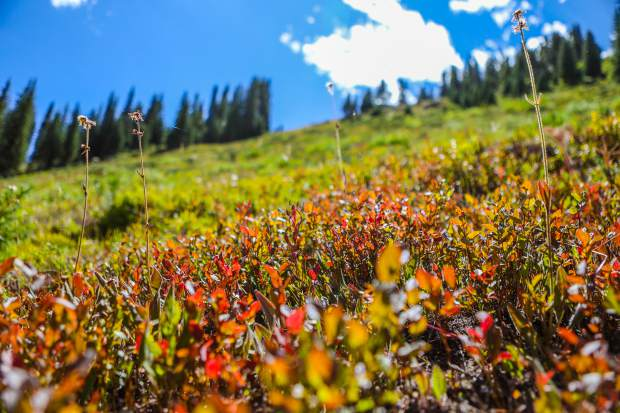Fall colors hard to predict, but Vail Valley\'s color season may be a ...