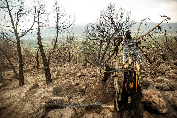A broken tree trunk in the burn zone on Aug. 1 in El Jebel above Ace Lane's property.