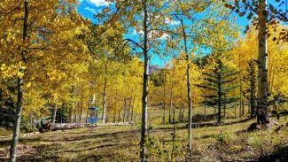 A hike with a purpose — Crossfire Disc Golf tournament slated this weekend