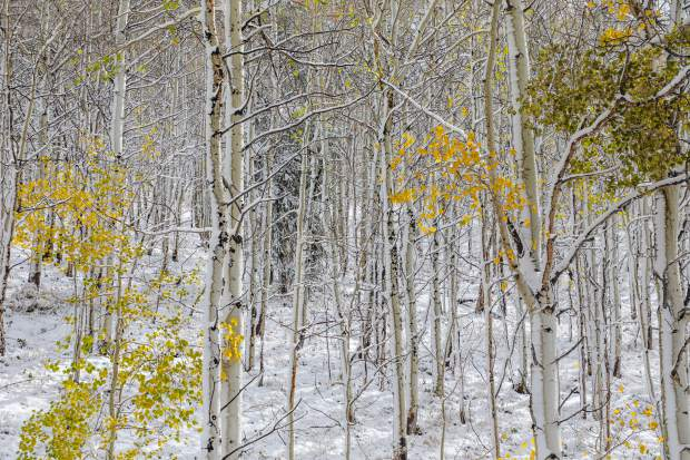 Snow and aspens make for a changing scene along Battle Mountain Pass Wednesday, Oct. 10, near Red Cliff. The snow caused traffic problems around the state.