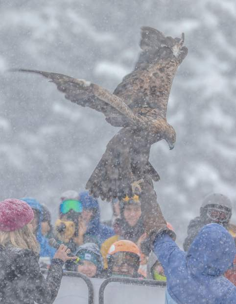 A golden eagle spreads its wings during the national anthem on Saturday, Dec. 1. Several birds of prey are present for the Xfinity Birds of Prey World Cup races through Sunday, Dec. 2.