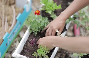 Short on land? Try container gardening