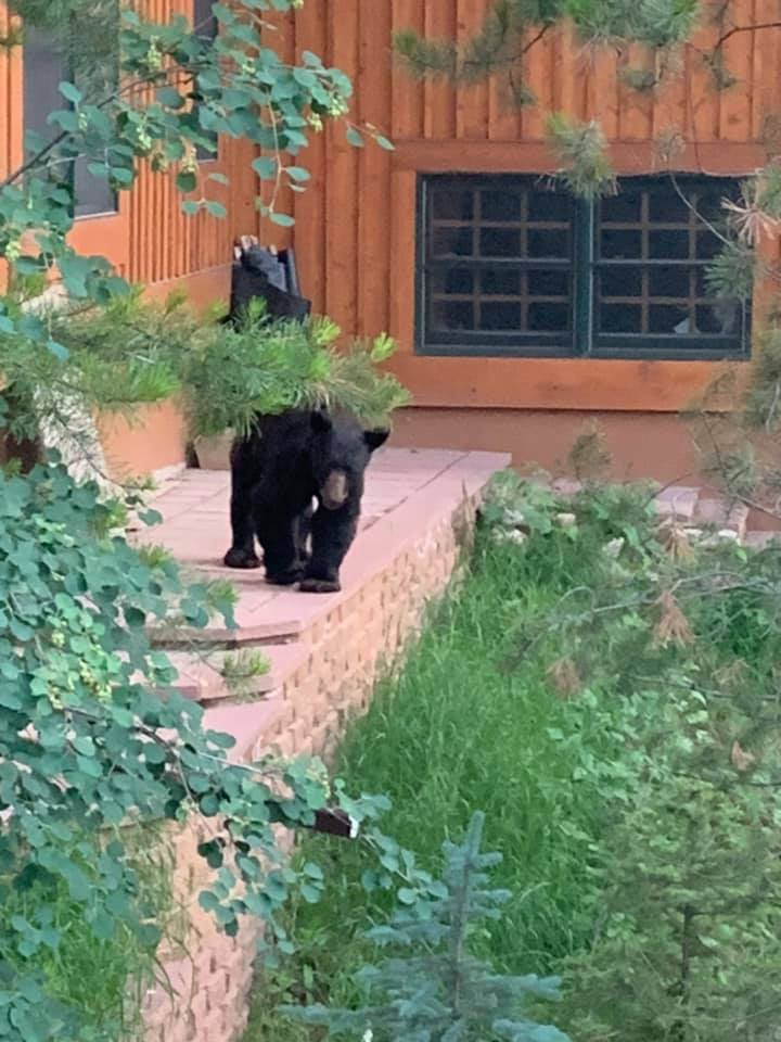 Rob Niehaus shared this photo, noting he spotted this bear in the Intermountain neighborhood.