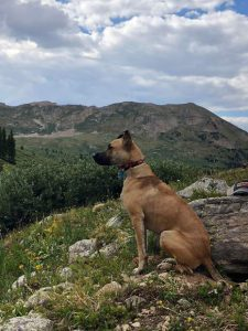 Pot-laced poop getting Aspen dogs high