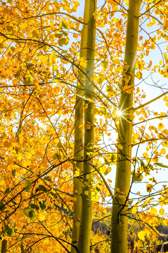 Aspen leaves glow in the fall sun Tuesday in Vail. Leaf peeping will probably be coming to an end after a cold front and storm rolling through later in the week.