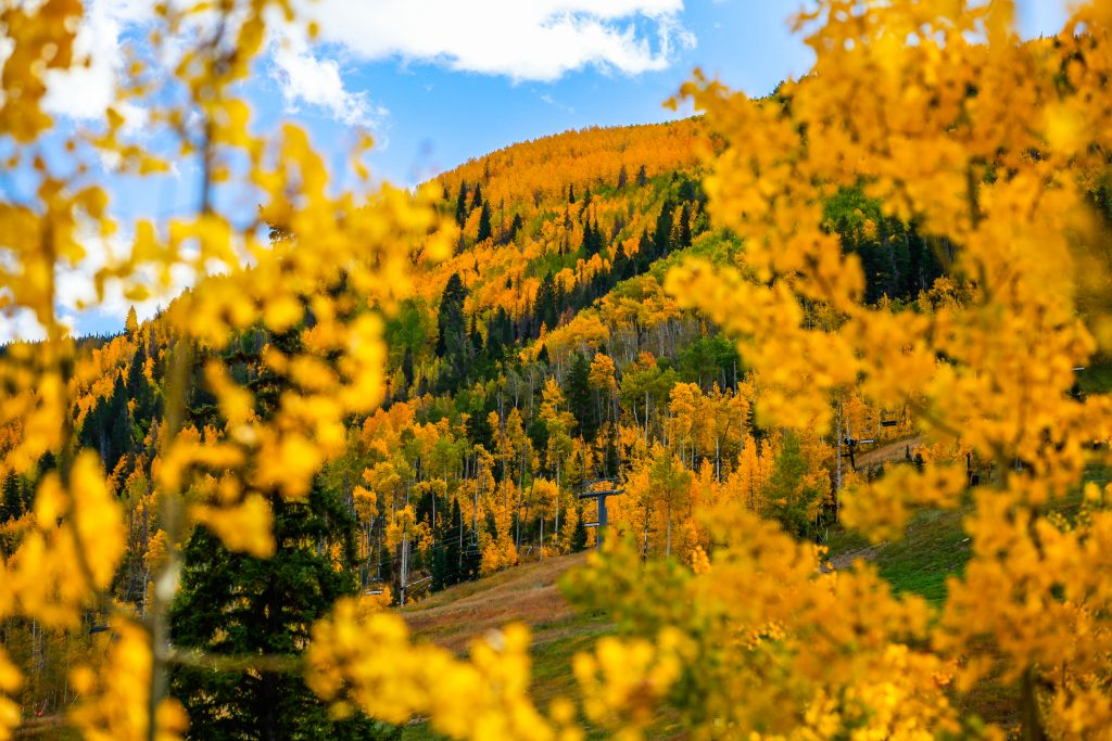 Aspens explode with color on Golden Peak Sunday in Vail. The colors are near-peak, and even though the gondolas have stopped running until ski season, the trails are perfect for hiking and biking still.