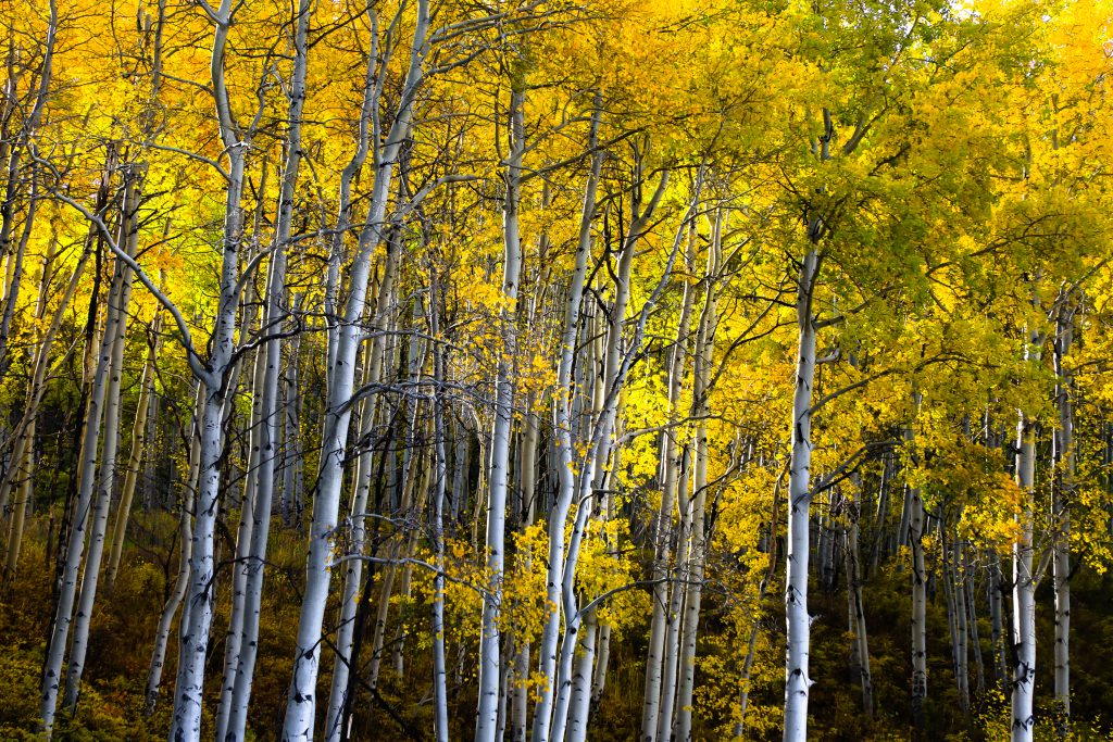 The early morning light illuminates the forest Wednesday near Arrowhead in Edwards. Weather will dry out Friday.