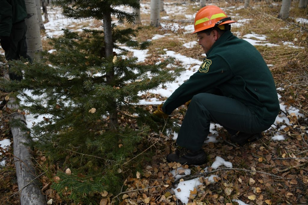 Christmas tree permits now available through U.S. Forest ...