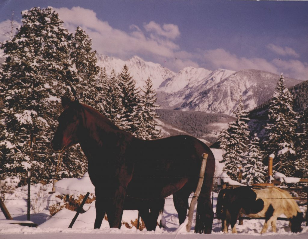 In the winter of 1964, these horses were among those watching from local ranches to see if the new ski area would make it. They're at the bottom of what is now Golden Peak.