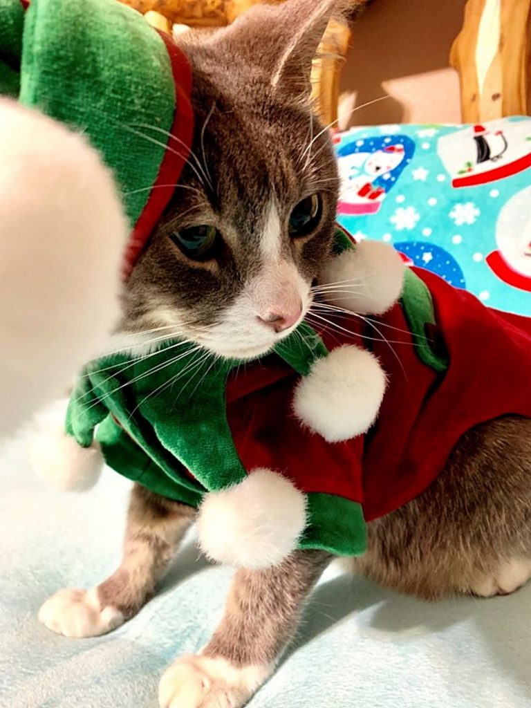 Squeaky, one reader's cat, gets into the Christmas spirit with an elf costume.