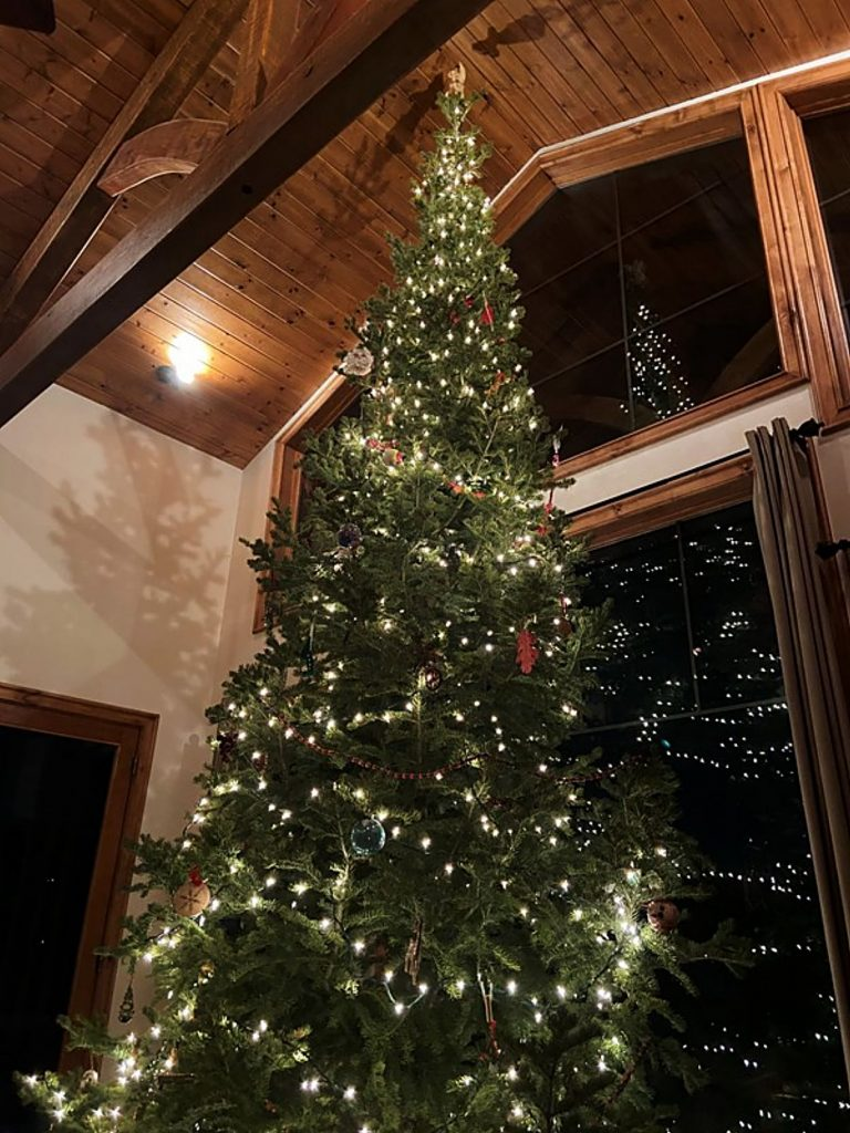 "These readers said, ""We found the perfect tree this year."""