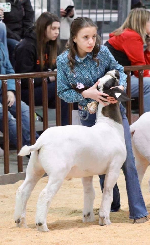 Alex Eichler and her sister Faythe travel all over the West to compete in livestock shows.