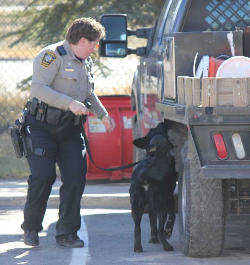 Echo is a drug detection dog, the Eagle County Sheriff's Office's ninth, and the only one working currently.