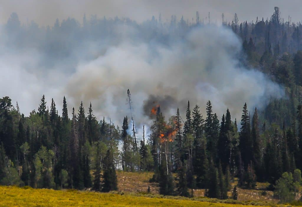 Flames from the Grizzly Creek Fire pick up as the wind increases during afternoon hours on Aug. 21 off Coffee Pot Road near Dotsero.