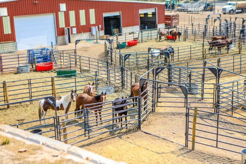 Since the Eagle County Fairgrounds animal stalls have sat empty due to Covid-19, it provided a perfect area to hold livestock evacuated from the Grizzly Creek Fire.