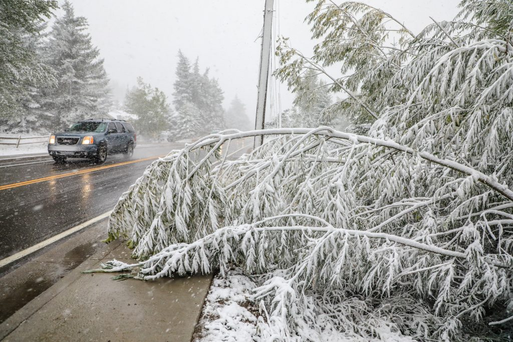 Downed trees from heavy snow and wind scattered the valley Tuesday in Minturn. The storm came in as rain and transitioned to heavy snow in the afternoon.