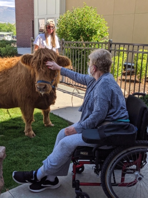 In August, Castle Peak residents enjoyed a parade of alpacas, horses, llamas, pigs, goats, sheep, cows, geese, polish chickens and more. They watched either from outside the building or from windows inside.