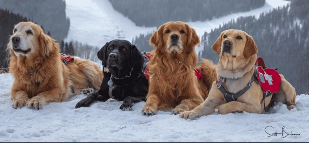 Photographer Scott Brockmeier has spent more than 10 years capturing images of Avalanche dogs at several resorts. Meet Brockmeier at the Colorado Snowsports Museum on Friday.